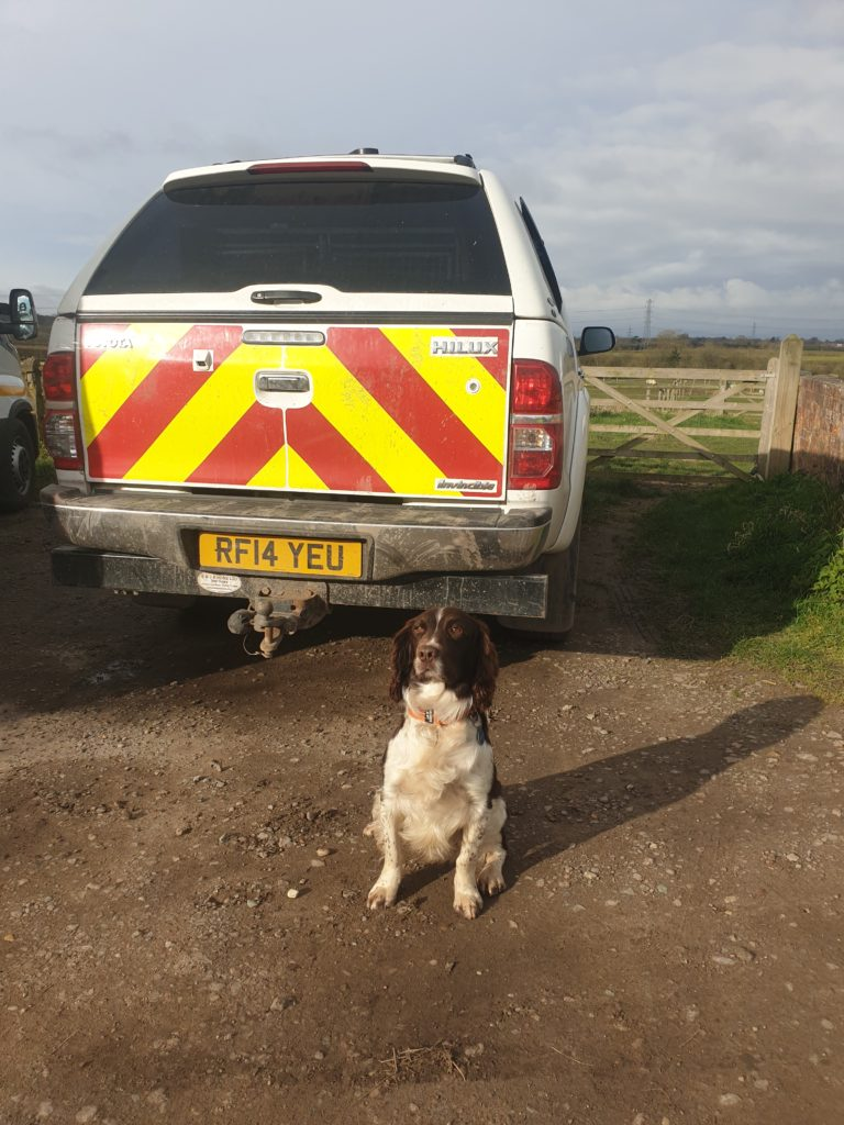 GCN Detection Dogs