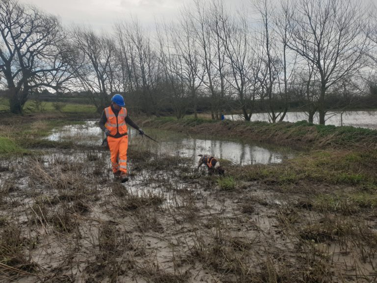 Great Crested Newt Detection Dogs