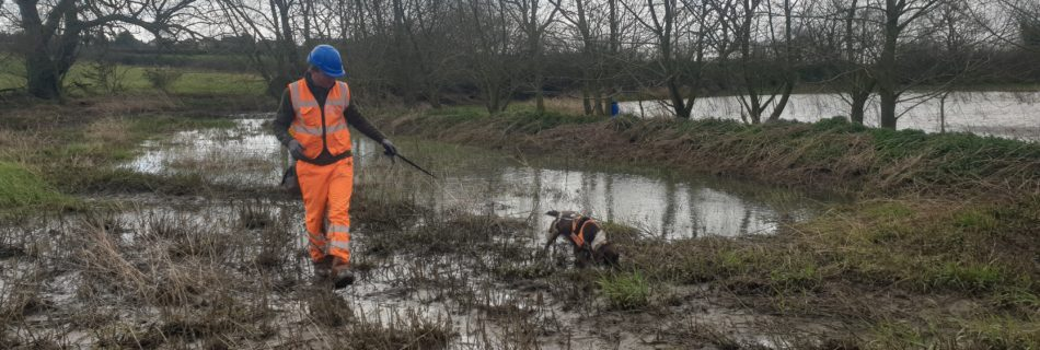 RammSanderson obtain 7th Low Impact Class Licence for Great Crested Newts