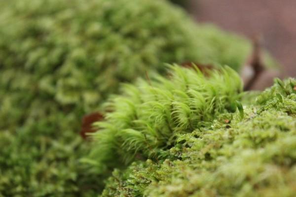 Phase 1 Habitat Surveys - RammSanderson Ecology