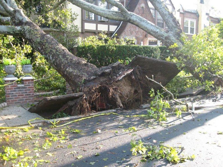 RammSanderson Arboriculture, Tree Management