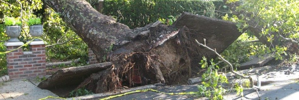 The importance of arboricultural risk management following high winds