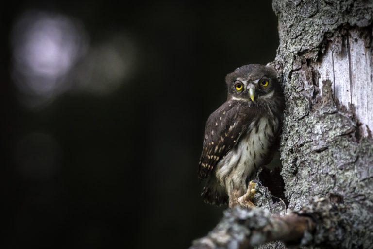 Tree veterinisation encourages wildlife