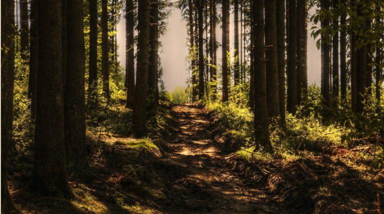 Derby arboriculturist | RammSanderson